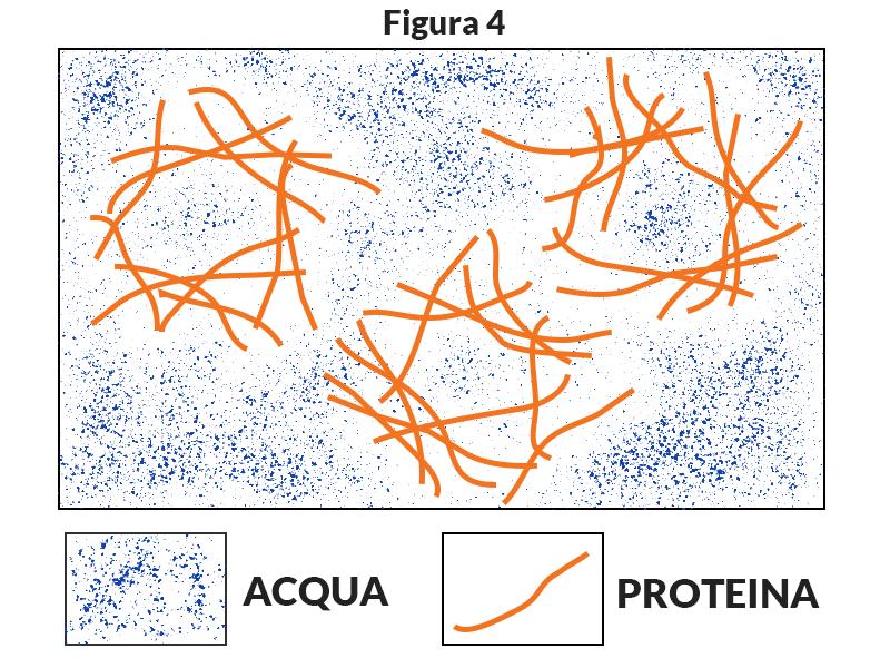 Coagulazione proteine