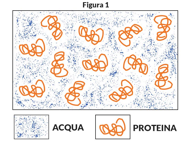 Proteine crude
